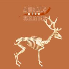 Deer Animals Skeletons Orange