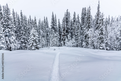 Stunning, white snow covered woods forest in northern Canada during winter time on a cloudy, cold day with whiteness surrounding the hiking trail.
