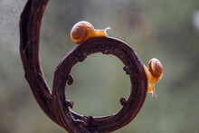 Small Snail With A Unique Wooden Trunk