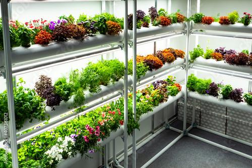 Photo Small greenhouse