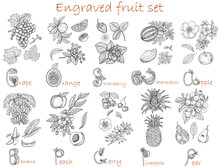 Design Set With Fruits Botanical Collection Isolated On White.  Hand Drawn Engraved Vector Illustration, Black And White Line Art, Healthy Eating, Vegan And Vegetarian Concept.