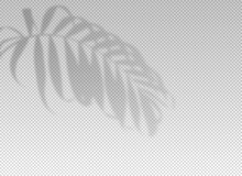 Shadow Plant Leaf Overlay Effect. Tropic Leaves. Sun Light From The Window On Palm Leaf Transparent On Background. Reflected On The Wall. Realistic Soft Summer Tropical Shade For Design Mockup. Vector