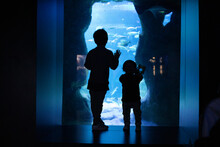 Two Children In Silhouette Look In Amazement Inside An Aquarium. Illusion Concept.