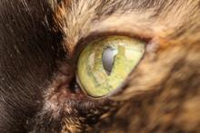 Cat Eye Macro Photo
