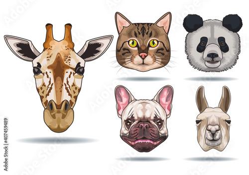 Fototapeta premium bundle of five animals domestics and wild icons