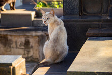 Lido Gato, De Pelos Claros, Sentado Sobre Um Túmulo. Gato Abandonado Em Cemitério Na Cidade De Goiânia.