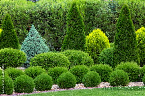 spring green plants green grass with cut bushes shape design sprinkled with natural stone mulching in a park with plants on a summer day Fotobehang