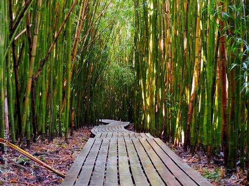 entre bambú y bambú