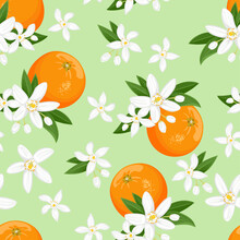 Seamless Pattern With Oranges Fruit And White Flowers On Green Background. Blooming Citrus Plant With Buds And Leaves. Vector Floral Illustration In Cartoon Flat Style.