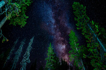 Stunning Milky Way Galaxy Above Bright Green Pine Trees