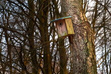 A Wooden Bird House With A Little Moss On A Birch Tree In A Forest
