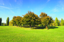 Lush Parkland With Group Of Autumn Trees. Italy.