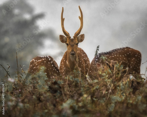 Fototapety, obrazy: deer in the forest
