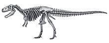 Tyrannosaurus Rex Skeleton, Illustration, Drawing, Engraving, Ink, Line Art, Vector