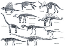 Dinosaur Skeleton Collection, Illustration, Drawing, Engraving, Ink, Line Art, Vector