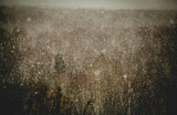 Fototapeta Krajobraz - Zimowy horyzont i śniego padający na las