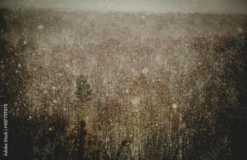 Fototapeta premium Zimowy horyzont i śniego padający na las