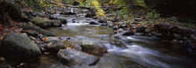 Water Flowing In The Forest, Vermont, Stream