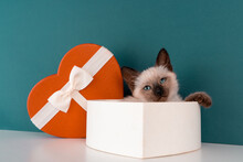 Kitten In A Gift Box In The Form Of A Heart. Gift For February 14. St. Valentine's Day