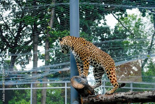 Wild animals in captivity. Fototapet