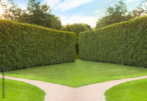 Obraz Choosing way. Brick path in garden on sunny day - fototapety do salonu