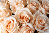 Flower wall, background of natural cream roses, natural cream roses