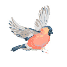 Vector Beautiful Realistic Illustration Of Bird Bullfinch. A Cute, Colorful Rand Detailed Winter Bird Isolated On White Background. Christmas Design Element. Christmas Robin Bird