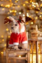 Little Beautiful Dog Dressed As Santa Claus