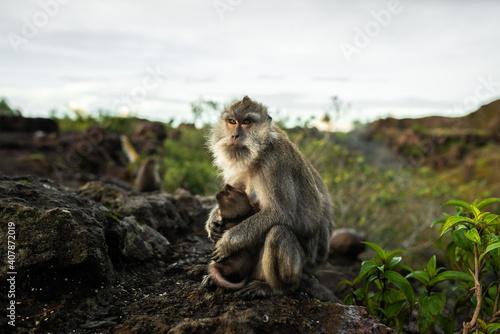 Matka małpa chroniąca swoje dziecko