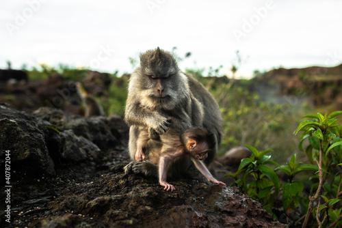 Mała małpka próbuje uciec z ramion matki