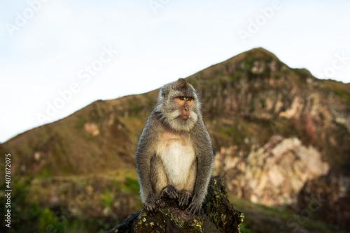 Siedząca małpa pozuje do zdjęcia o wschodzie słońca
