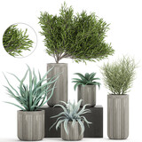 exotic plants in a concrete pot on white background