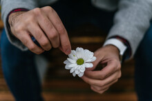 Man's Hand Plucking Off The Petals From A White Flower