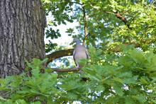 A Bird Sitting On A Branch Among The Greenery Of The Park