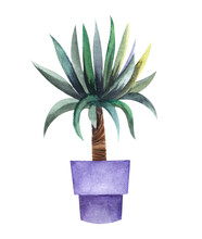 Watercolor Image Of Small Palm In Big Violet Pot Isolated On White Background. Houseplant With Long Bushy Leaves Growing From Top Of Thick Stem. Hand Drawn Botanical Illustration Of Dracaena