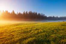 Misty Morning Pasture In The Sunlight. Locations Place Durmitor National Park, Montenegro.