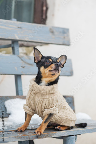 Photo small dog jacket cold in the winter