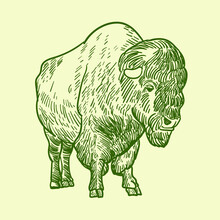 Vintage Hand Drawn Green Bison