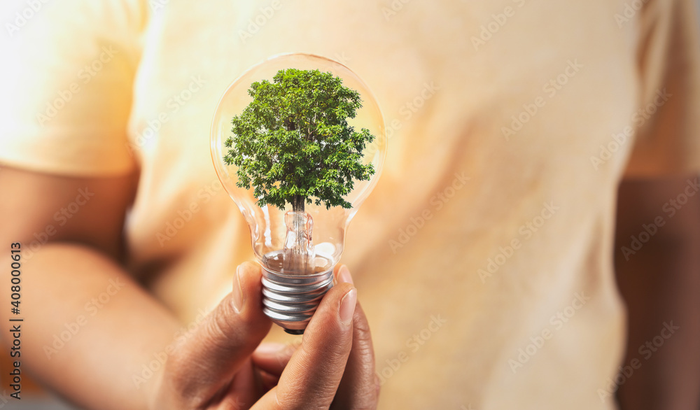 Fototapeta hand holding lightbulb with tree insite. concept eco energy inovation