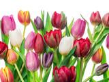 Fototapeta Tulipany - Colorful bouquet of tulips on white background.