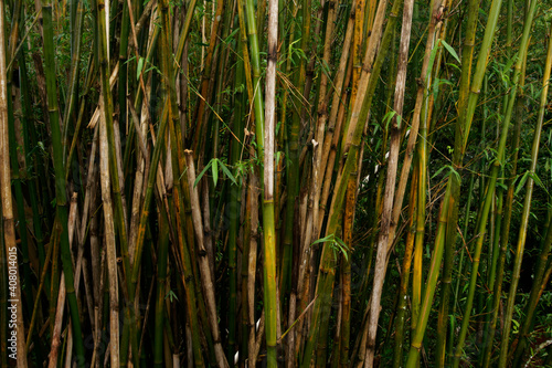 Papel de parede Closeup shot of bamboos in a field