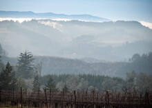 A Hazy Winter View Across Hills Shows Layers And Tones Of Color, Forest And Fir Trees, And In The Foreground, Bare Vines In An Oregon Vineyard.