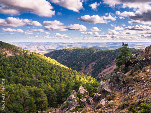 Obraz na plátně Valle con bosque de pinos con un arbol en primer plano y fondo de cielo azul con