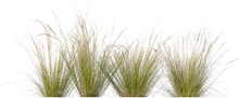 Tufts Of Ornamental Grass Isolated On White Background