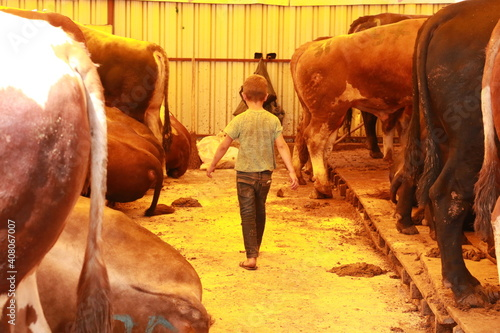 Canvas Print Little boy working as a shepherd in a cow and cattle sales market