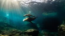 Underwater Photography In Baja California Sur, Mexico
