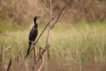 Cormorant On Branch