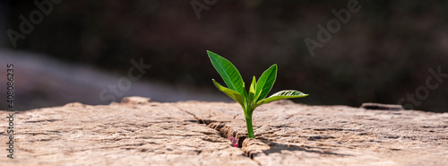 Canvas Print A strong seedling growing in the old center dead tree ,Concept of support buildi