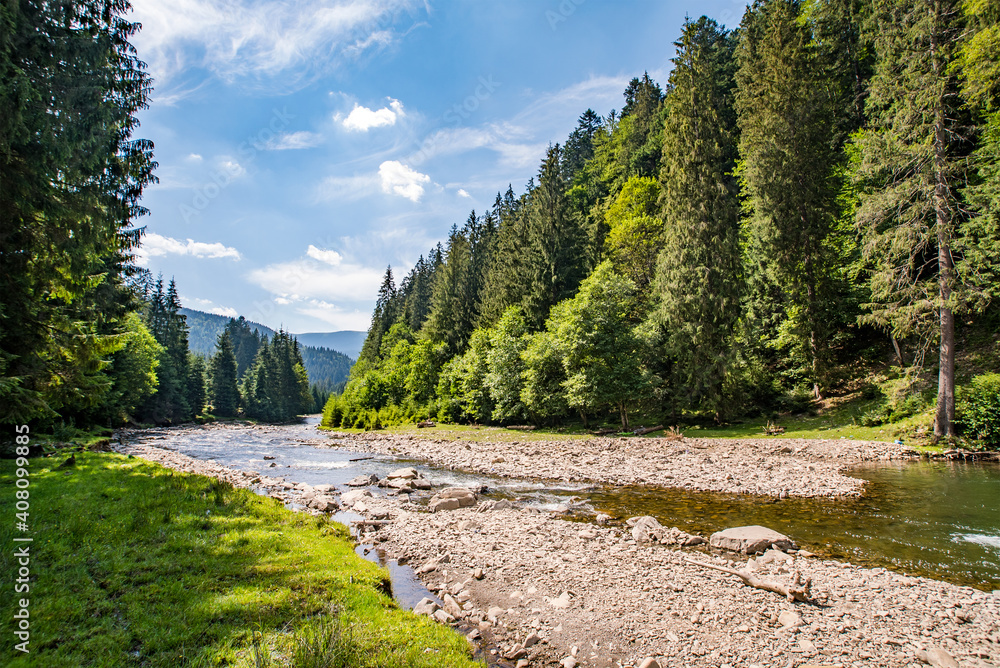 Fototapeta mountain river near the coniferous forest on a background of mountains and blue sky.