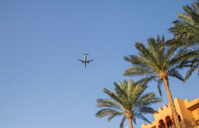 Plane In The Sky Over Palm Trees In Egypt